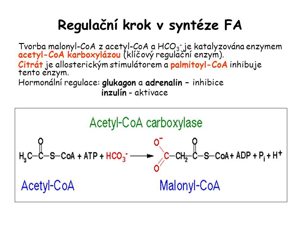 Regulační krok v syntéze FA