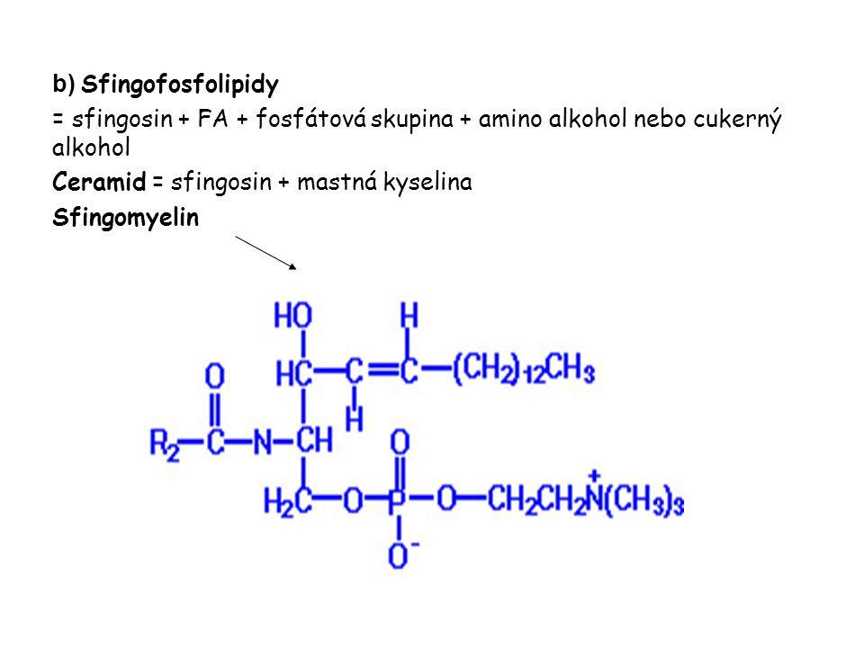 b) Sfingofosfolipidy = sfingosin + FA + fosfátová skupina + amino alkohol nebo cukerný alkohol. Ceramid = sfingosin + mastná kyselina.