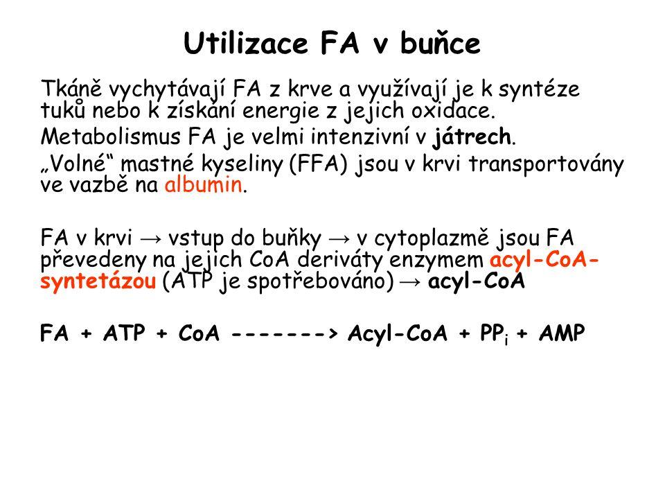 Utilizace FA v buňce Tkáně vychytávají FA z krve a využívají je k syntéze tuků nebo k získání energie z jejich oxidace.