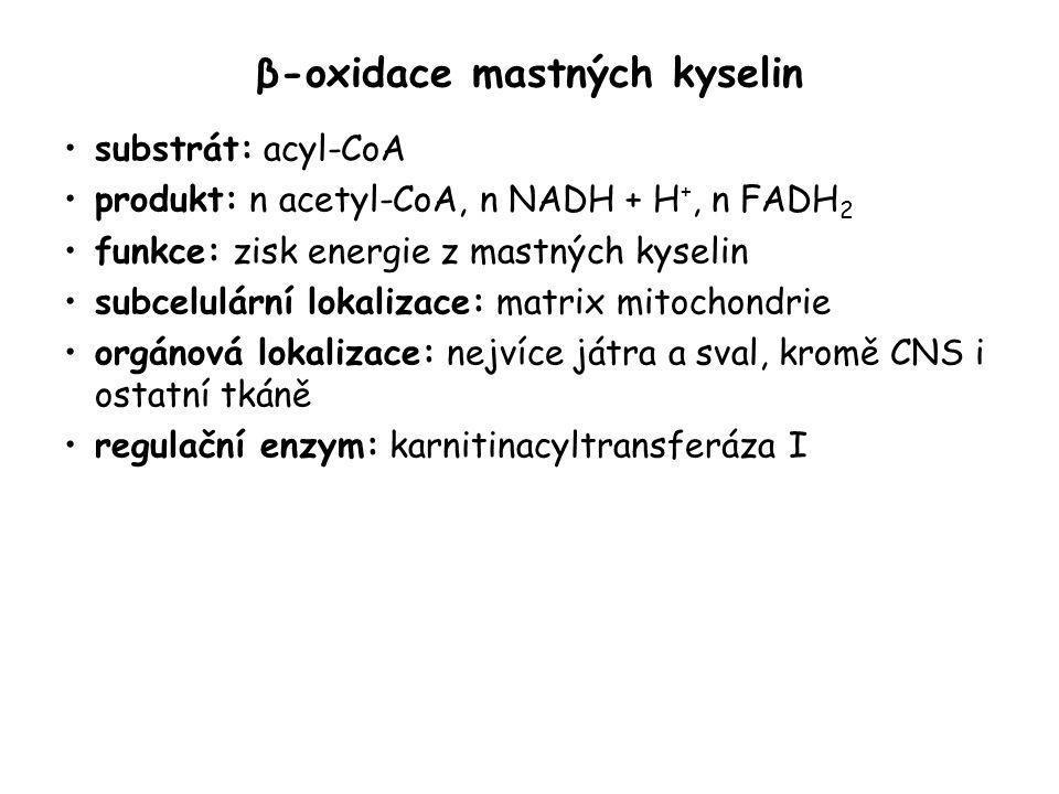 β-oxidace mastných kyselin