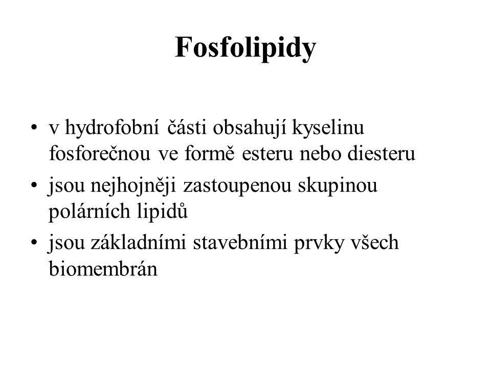 Fosfolipidy v hydrofobní části obsahují kyselinu fosforečnou ve formě esteru nebo diesteru. jsou nejhojněji zastoupenou skupinou polárních lipidů.