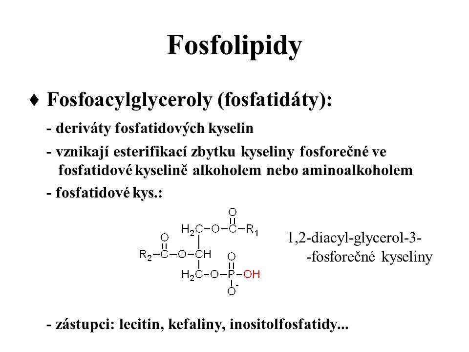 Fosfolipidy ♦ Fosfoacylglyceroly (fosfatidáty):