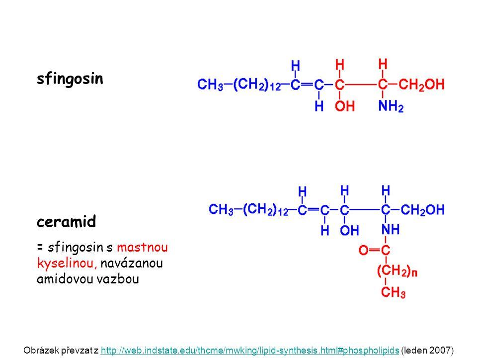sfingosin ceramid. = sfingosin s mastnou kyselinou, navázanou amidovou vazbou.