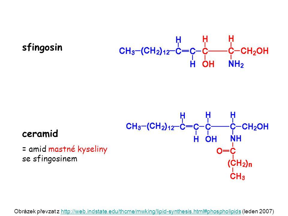 sfingosin ceramid = amid mastné kyseliny se sfingosinem