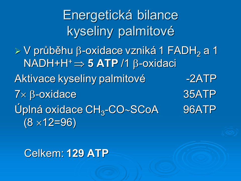 Energetická bilance kyseliny palmitové