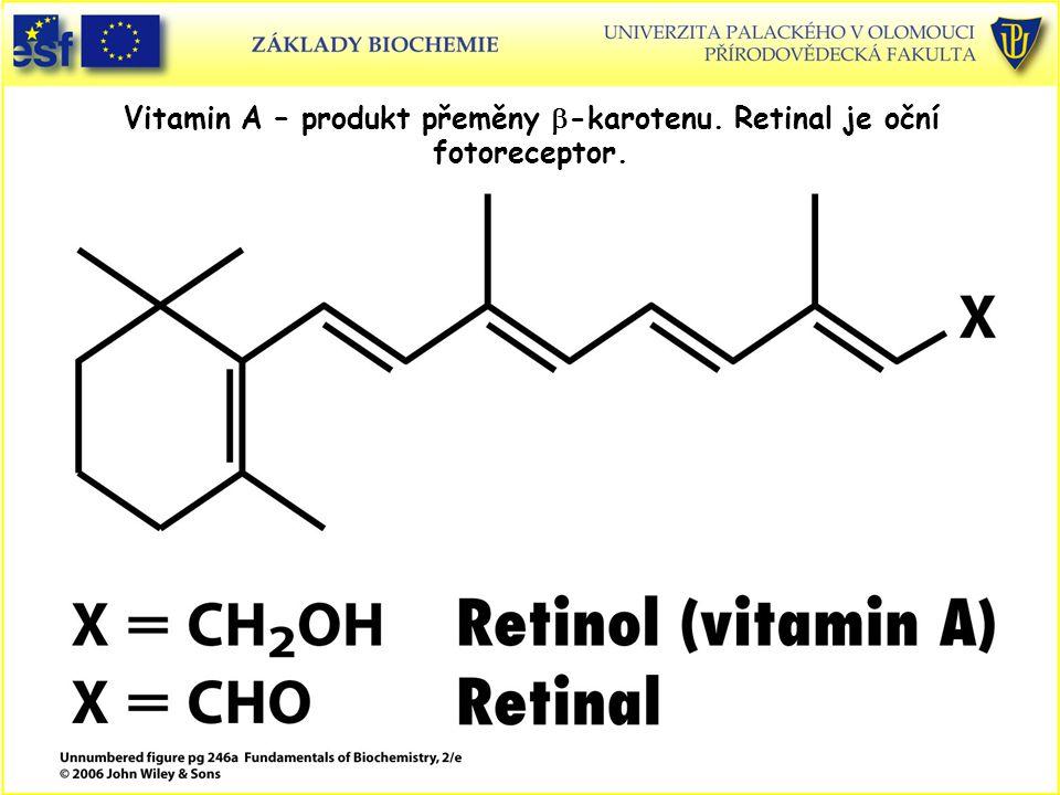 Vitamin A – produkt přeměny b-karotenu. Retinal je oční fotoreceptor.