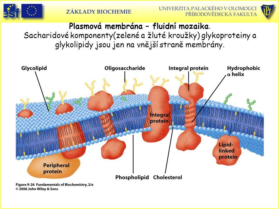 Plasmová membrána – fluidní mozaika