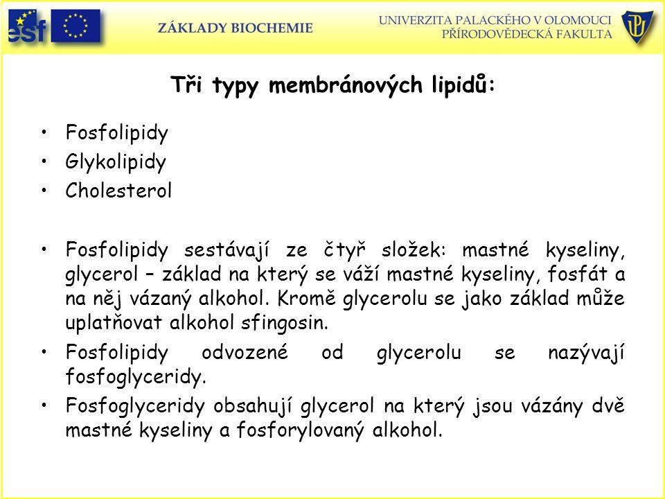 Tři typy membránových lipidů:
