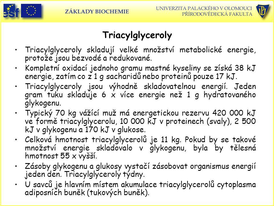 Triacylglyceroly Triacylglyceroly skladují velké množství metabolické energie, protože jsou bezvodé a redukované.
