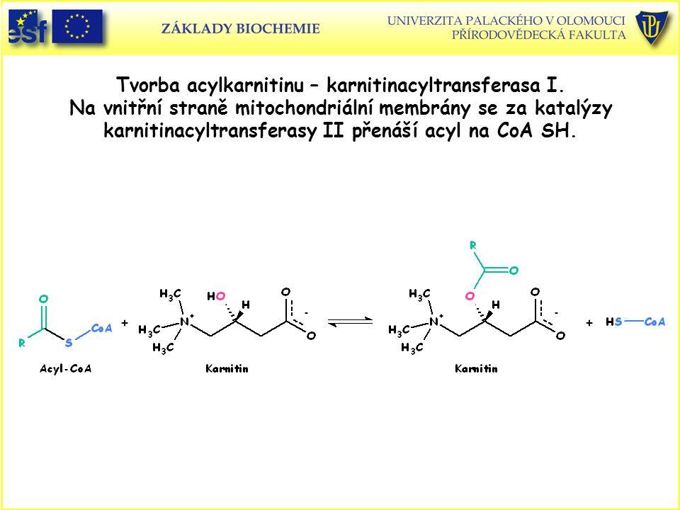 Tvorba acylkarnitinu – karnitinacyltransferasa I