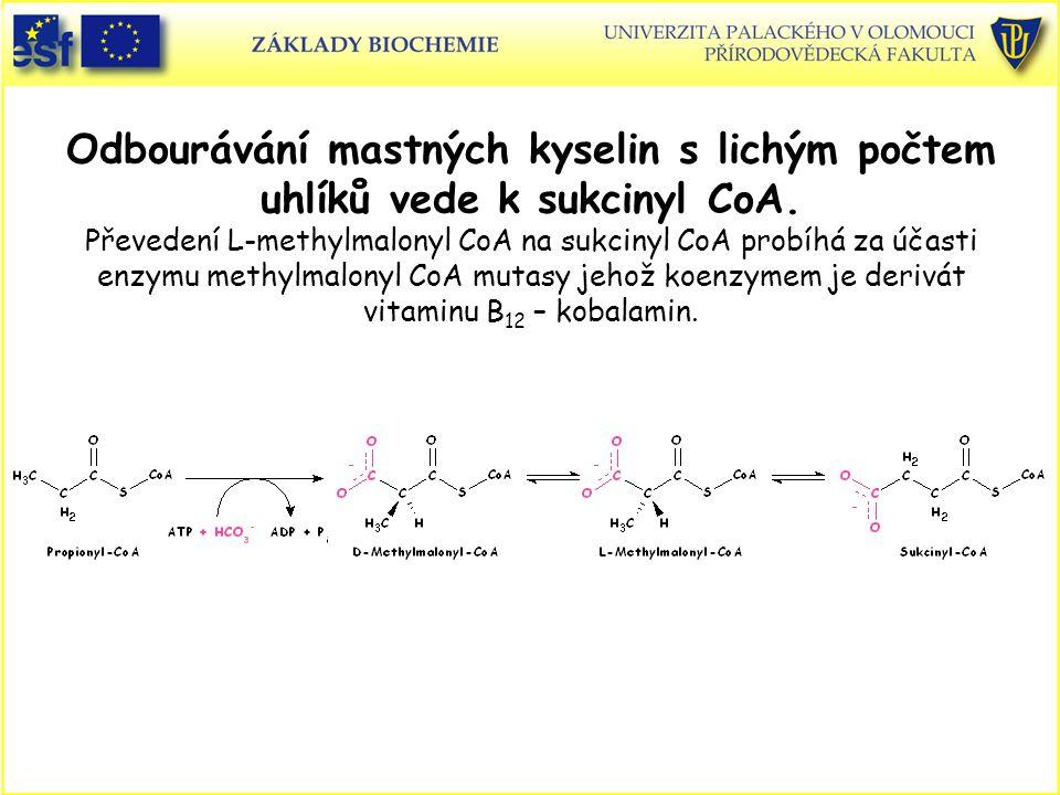 Odbourávání mastných kyselin s lichým počtem uhlíků vede k sukcinyl CoA.