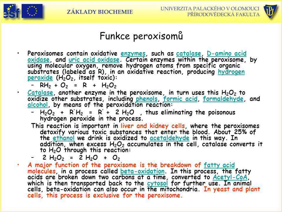 Funkce peroxisomů