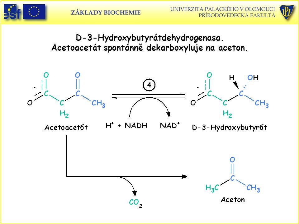 D-3-Hydroxybutyrátdehydrogenasa