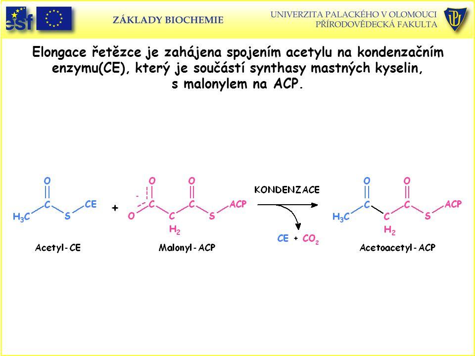 Elongace řetězce je zahájena spojením acetylu na kondenzačním enzymu(CE), který je součástí synthasy mastných kyselin, s malonylem na ACP.