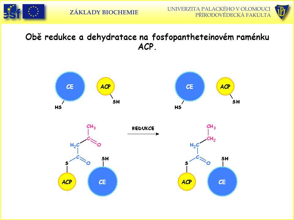 Obě redukce a dehydratace na fosfopantheteinovém raménku ACP.