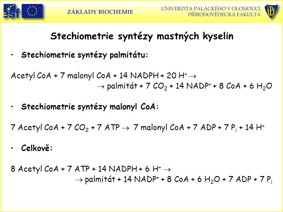 Stechiometrie syntézy mastných kyselin