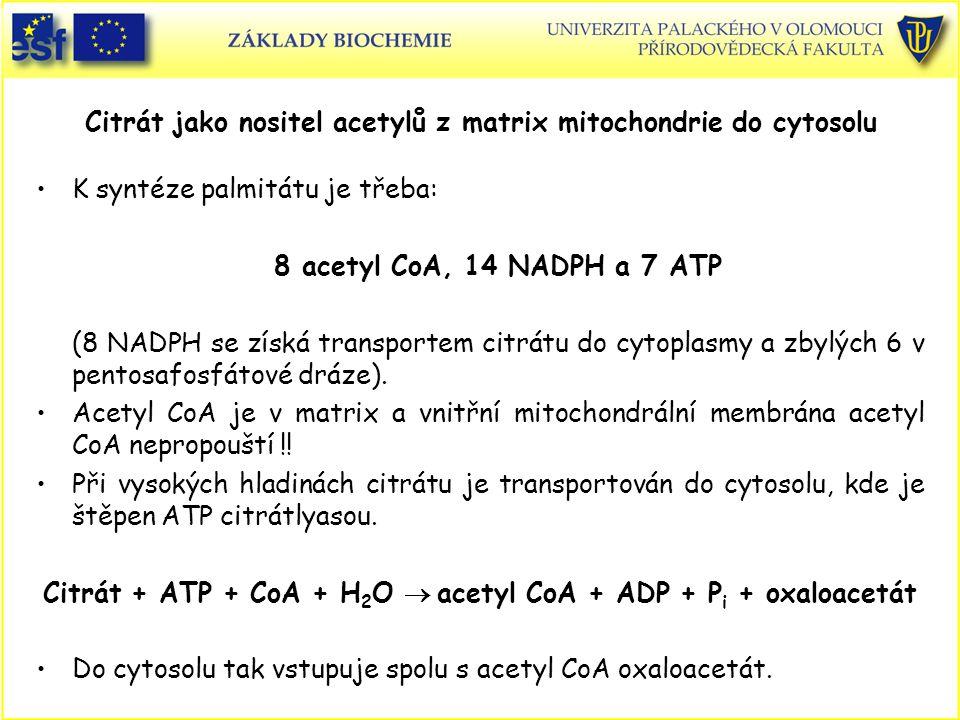 Citrát jako nositel acetylů z matrix mitochondrie do cytosolu