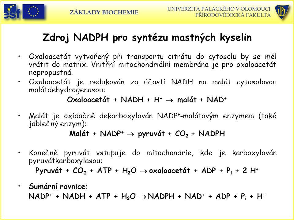 Zdroj NADPH pro syntézu mastných kyselin