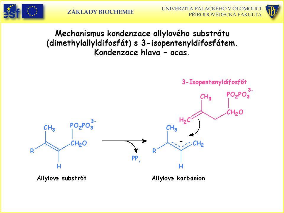 Mechanismus kondenzace allylového substrátu (dimethylallyldifosfát) s 3-isopentenyldifosfátem.