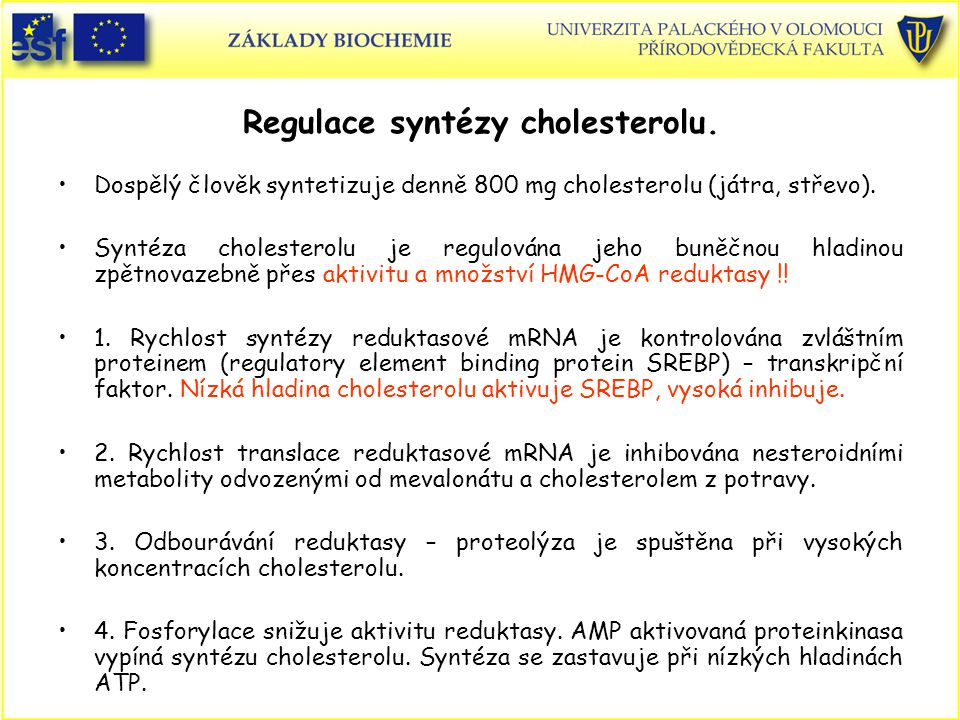 Regulace syntézy cholesterolu.