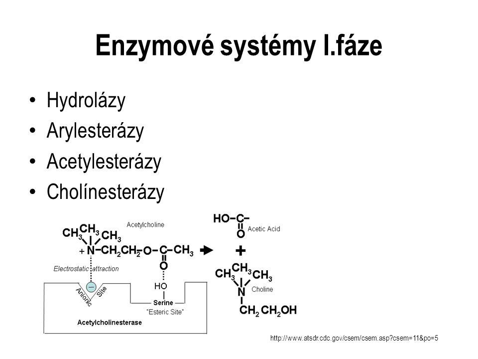 Enzymové systémy I.fáze