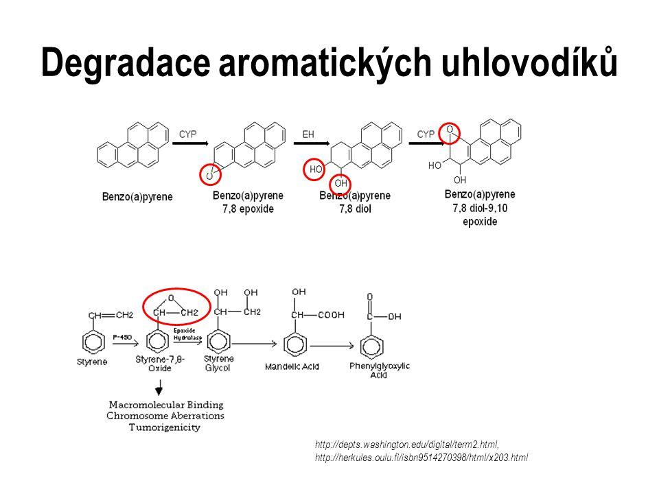 Degradace aromatických uhlovodíků