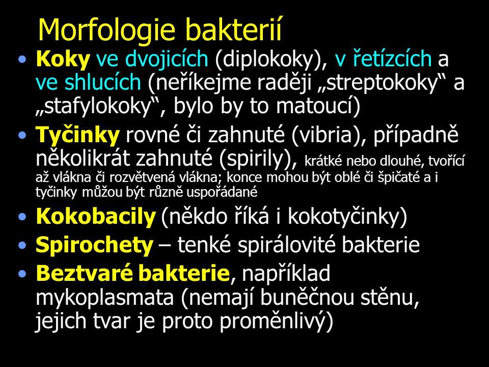 """Morfologie bakterií Koky ve dvojicích (diplokoky), v řetízcích a ve shlucích (neříkejme raději """"streptokoky a """"stafylokoky , bylo by to matoucí)"""