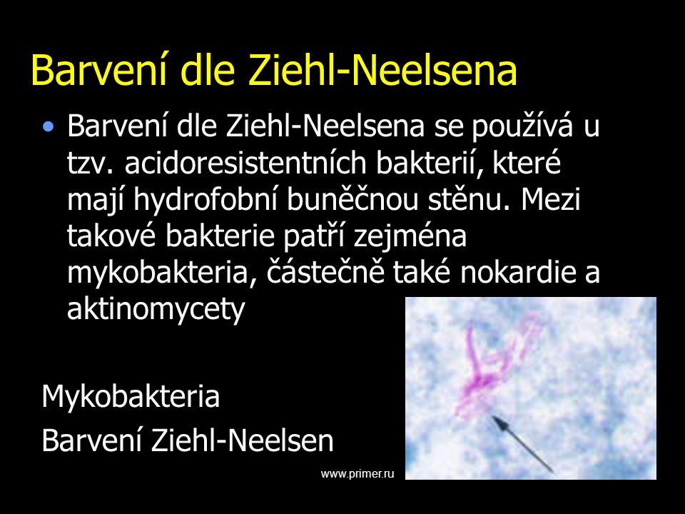 Barvení dle Ziehl-Neelsena