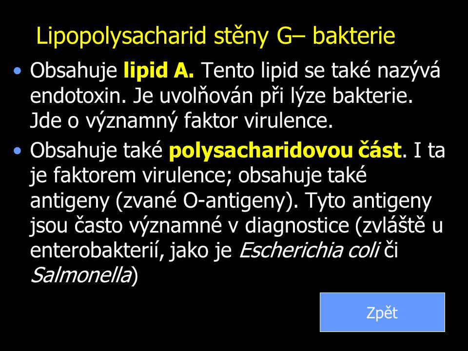 Lipopolysacharid stěny G– bakterie
