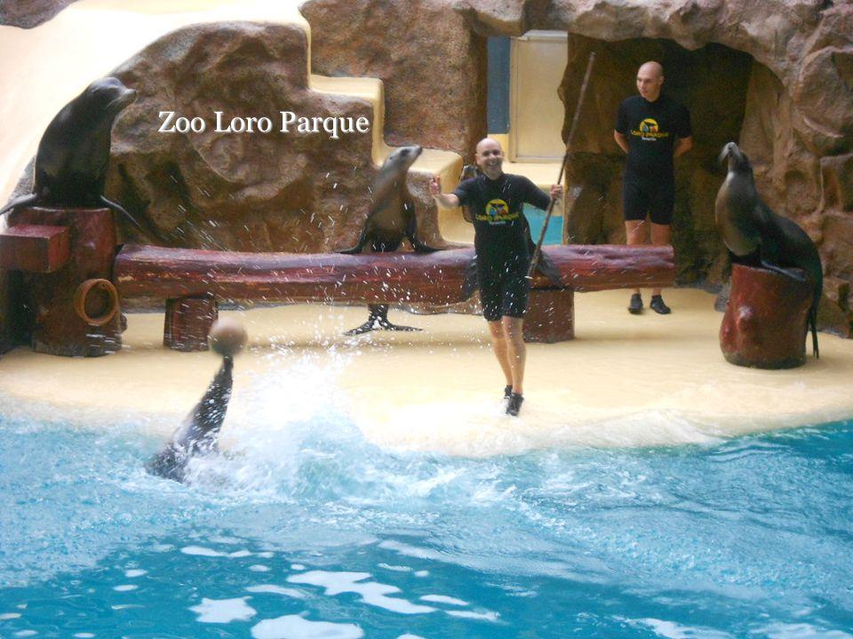 Zoo Loro Parque