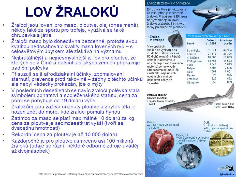 LOV ŽRALOKŮ Žraloci jsou loveni pro maso, ploutve, olej (dnes méně), někdy také ze sportu pro trofeje, využívá se také chrupavka a játra.