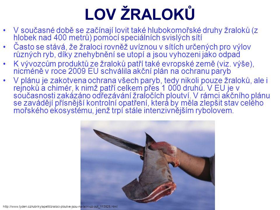 LOV ŽRALOKŮ V současné době se začínají lovit také hlubokomořské druhy žraloků (z hlobek nad 400 metrů) pomocí speciálních svislých sítí.