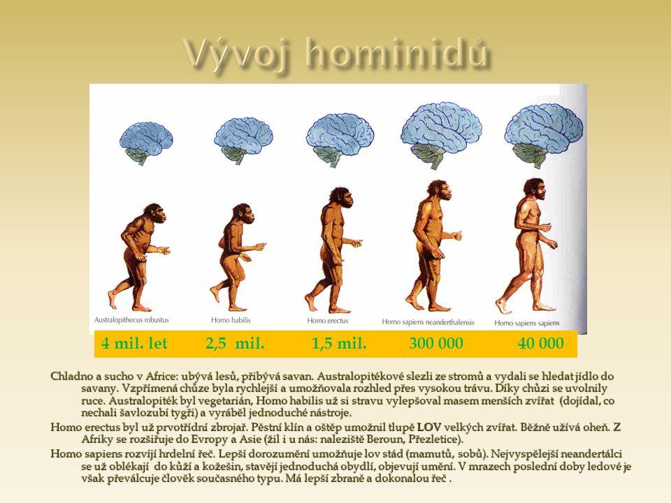 Vývoj hominidů 4 mil. let 2,5 mil. 1,5 mil. 300 000 40 000