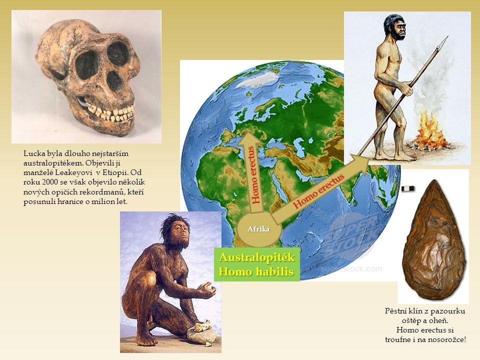 Australopiték Homo habilis Homo erectus Homo erectus
