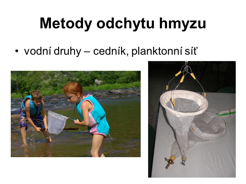 Metody odchytu hmyzu vodní druhy – cedník, planktonní síť