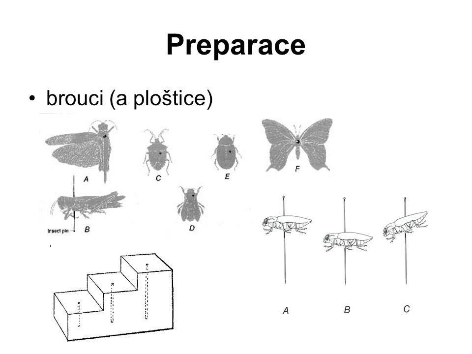 Preparace brouci (a ploštice)