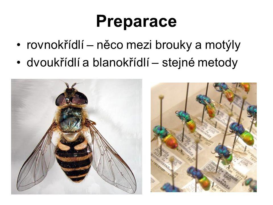 Preparace rovnokřídlí – něco mezi brouky a motýly