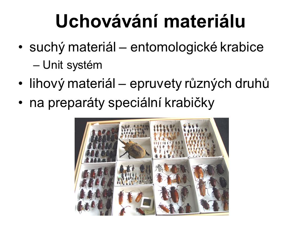Uchovávání materiálu suchý materiál – entomologické krabice