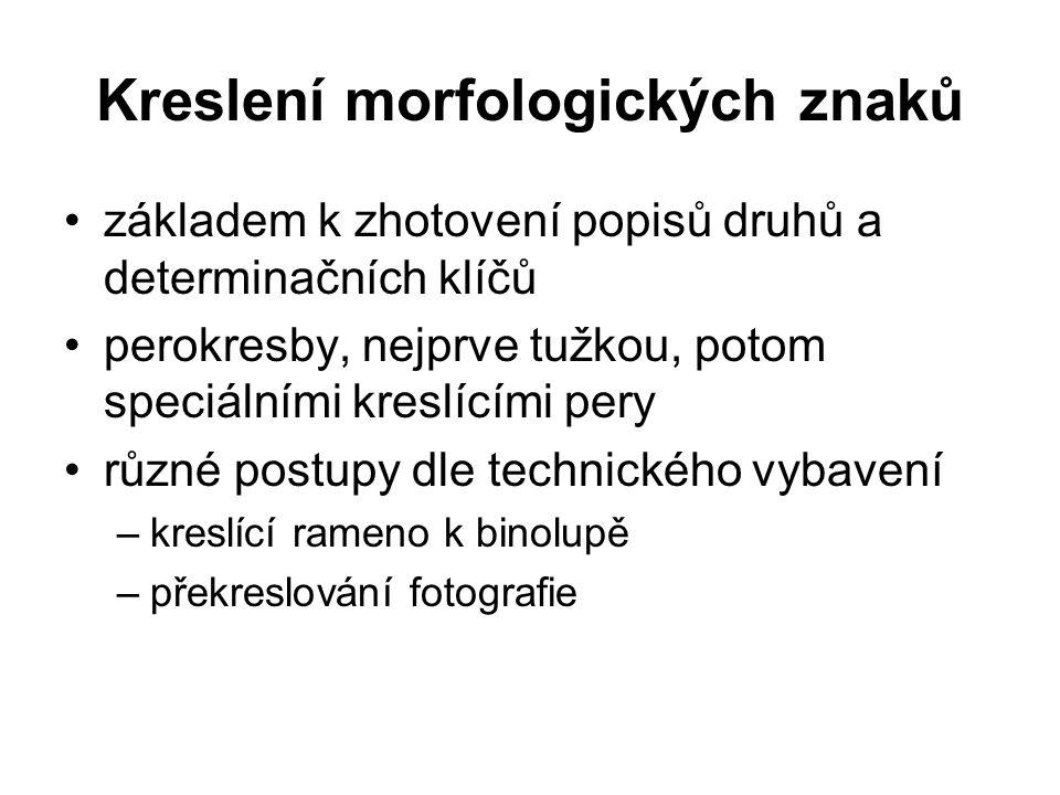 Kreslení morfologických znaků
