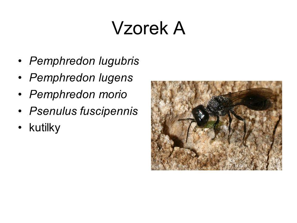 Vzorek A Pemphredon lugubris Pemphredon lugens Pemphredon morio
