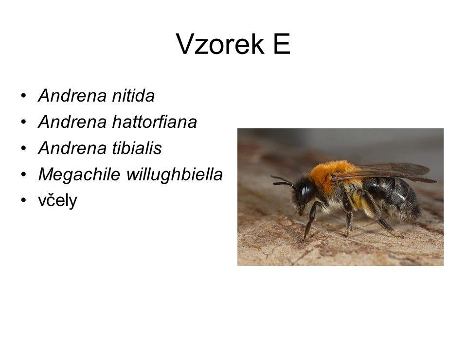 Vzorek E Andrena nitida Andrena hattorfiana Andrena tibialis