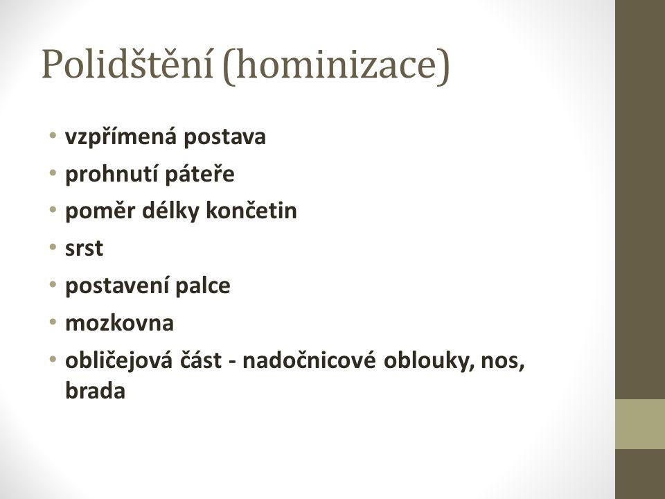 Polidštění (hominizace)