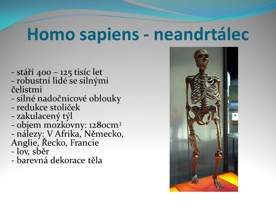 Homo sapiens - neandrtálec