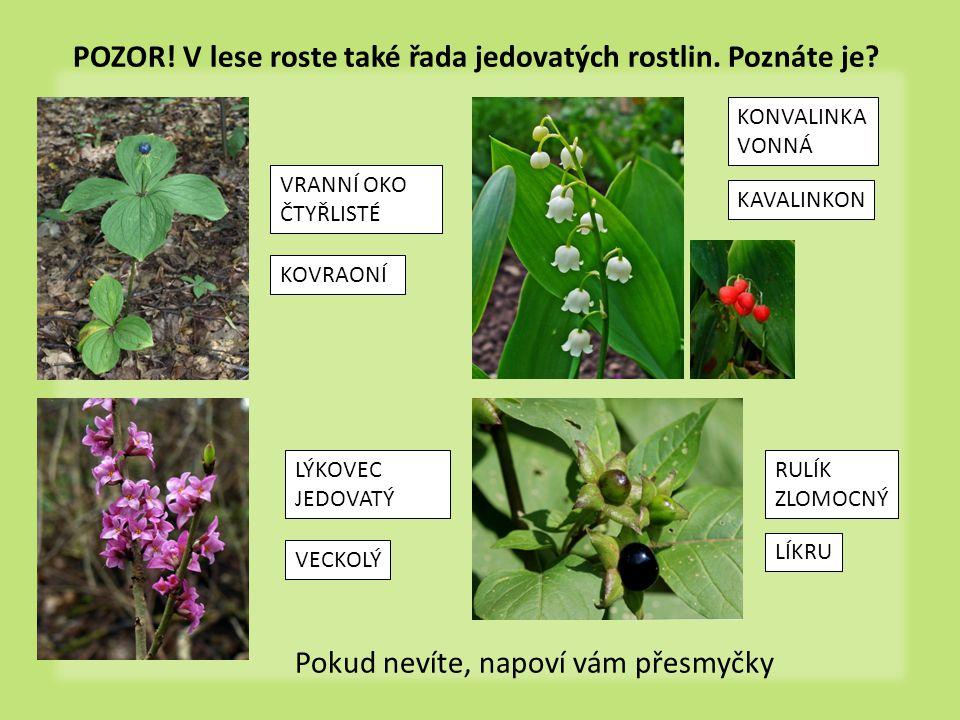 POZOR! V lese roste také řada jedovatých rostlin. Poznáte je