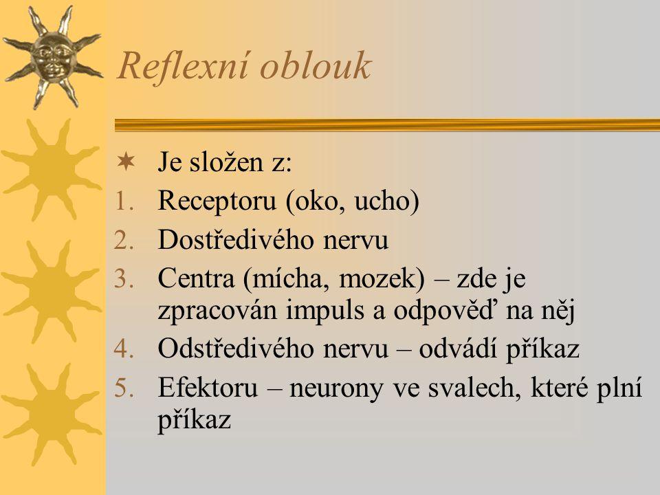 Reflexní oblouk Je složen z: Receptoru (oko, ucho) Dostředivého nervu
