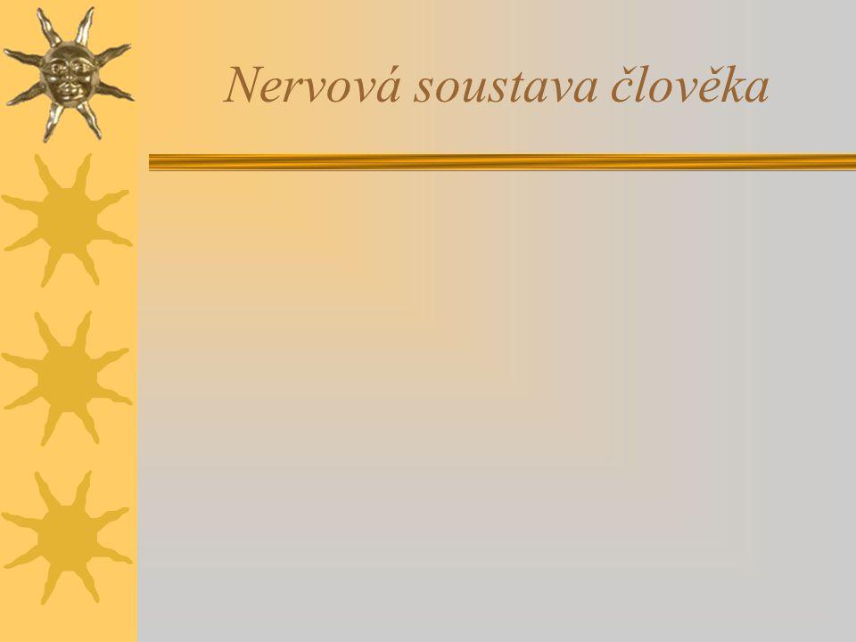 Nervová soustava člověka