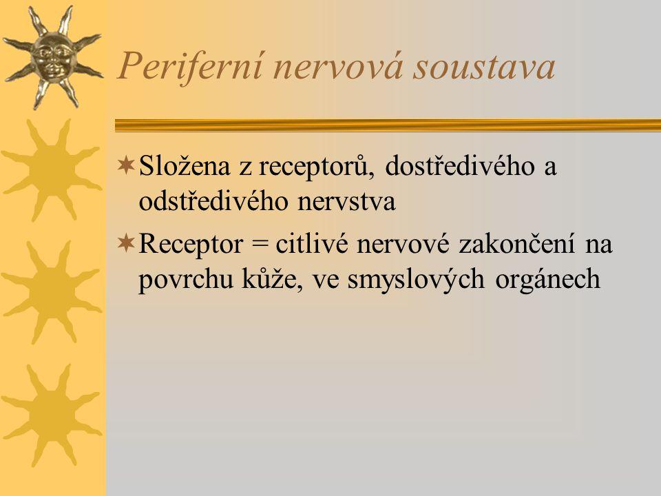 Periferní nervová soustava