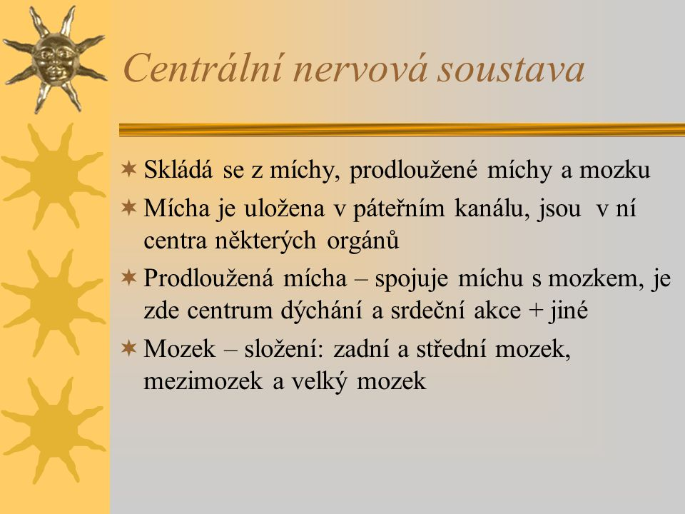 Centrální nervová soustava