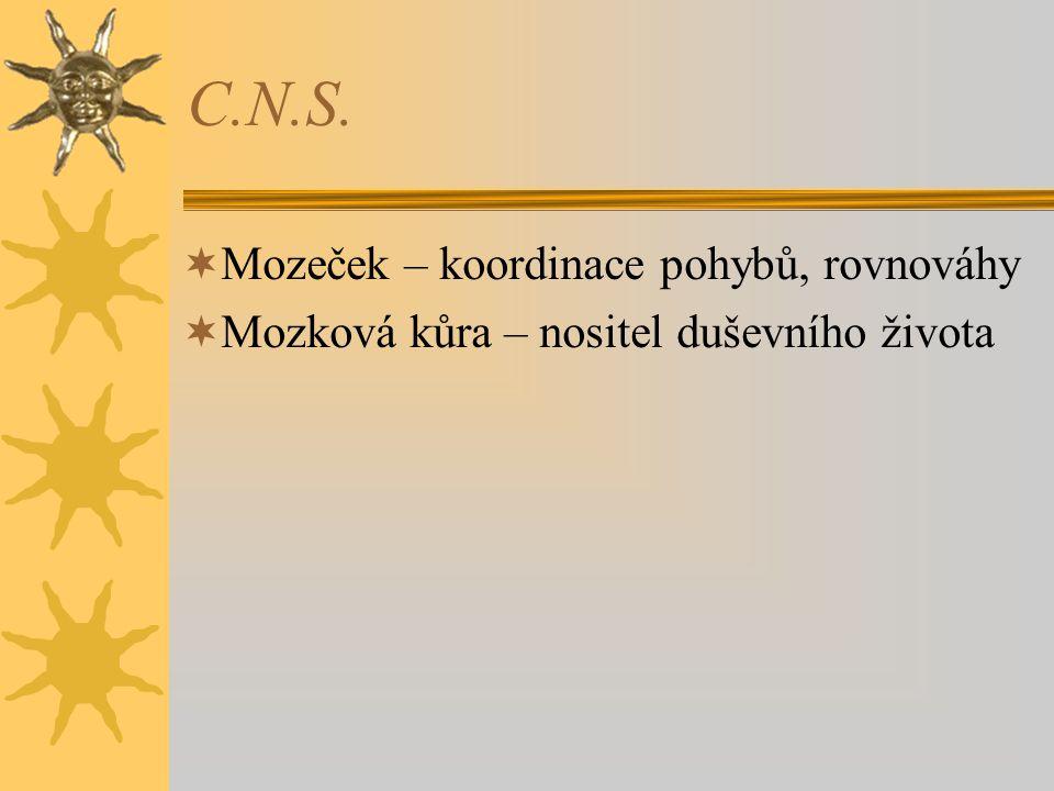 C.N.S. Mozeček – koordinace pohybů, rovnováhy