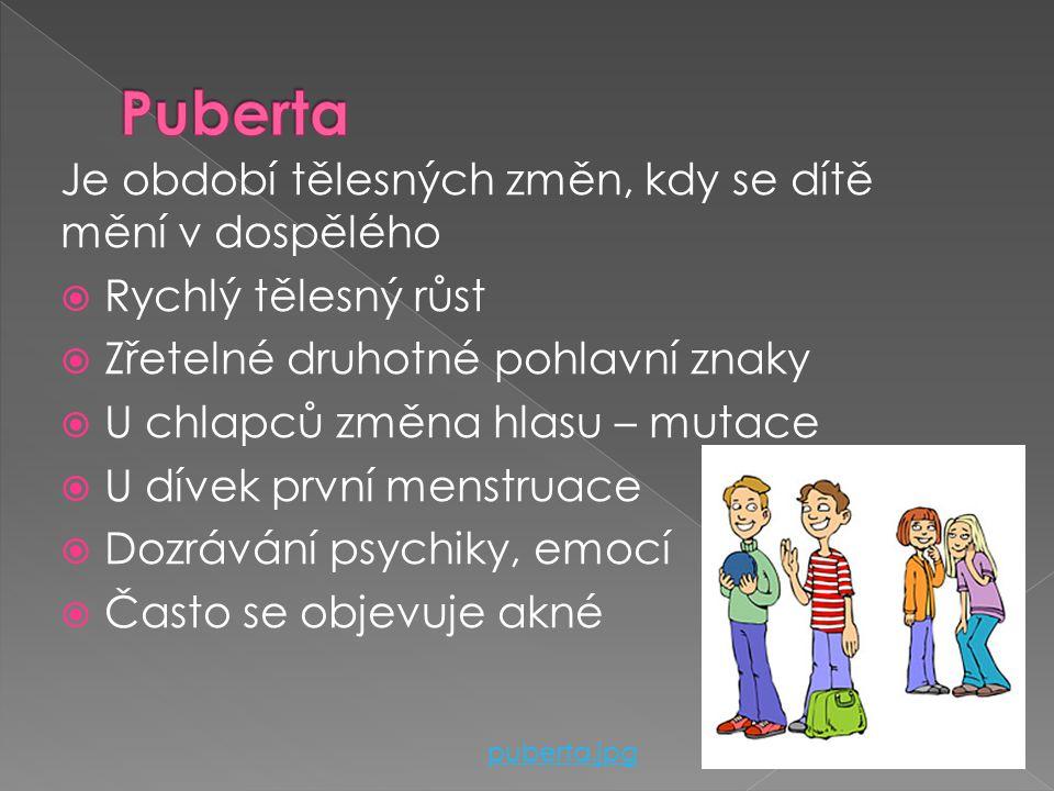 Puberta Je období tělesných změn, kdy se dítě mění v dospělého